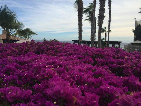 Pueblo Bonito Sunset Beach: Muchas bugambilias