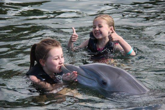 Florida Dolphin Tours: Lotus
