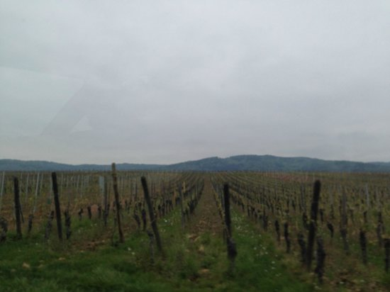 Regioscope Tours: view of vinyard