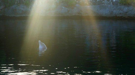Parc Xel-Ha : delfines