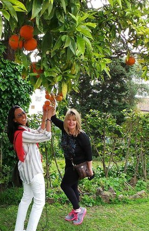 Aziz Saint Laurent Private Tours: Picking oranges in Tangier, Morrocco