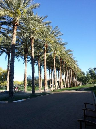 JW Marriott Phoenix Desert Ridge Resort & Spa: Palm Trees! This place is beautiful!
