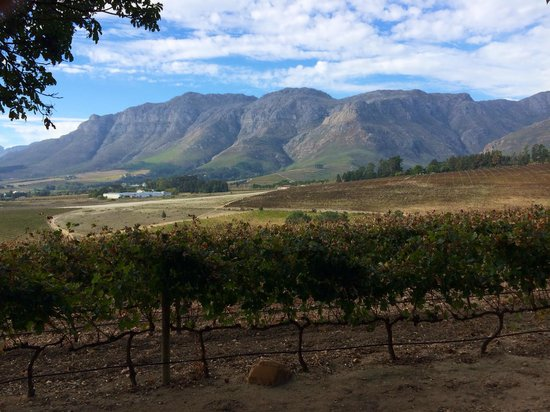 Long Table Restaurant: View from the outdoor seating area towards Stellenbosch Mountain