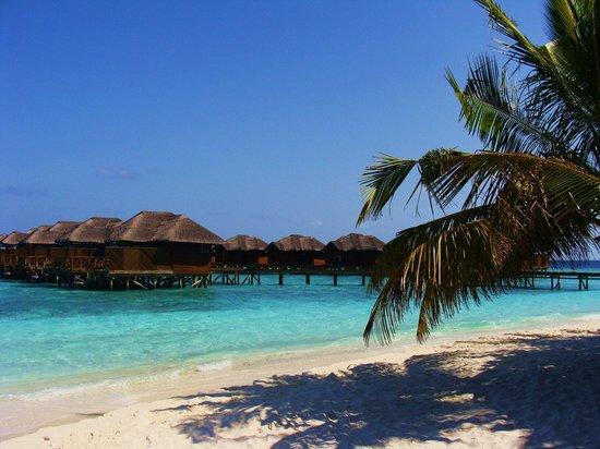 Fihalhohi Island Resort : :)