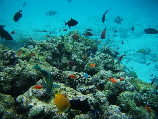 Fihalhohi Island Resort : :) (may 2011)