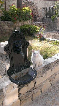 Hotel Altinsaray: hotel cat, munchkin
