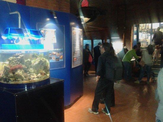 Vasca2 Picture Of Anton Dohrn Aquarium Acquario