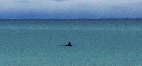 Hilton Sandestin Beach, Golf Resort & Spa: Watch for Dolphins!