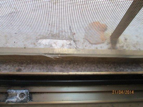 Hotel Marsala : finestra sporchissima e rotta, escrementi fuori