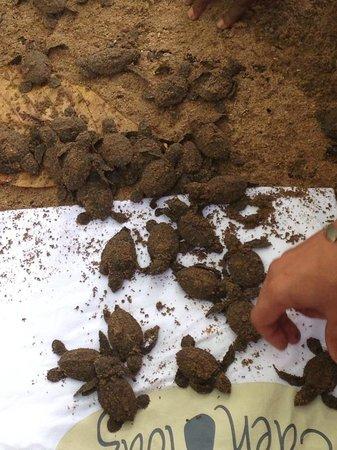 Eden Lodge: naissance des tortues