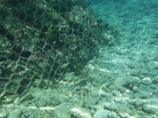 Kurumba Maldives : Underwater snorkelling