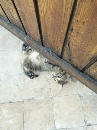 Dar Roumana: One of the playful kittens on the roof terrace!