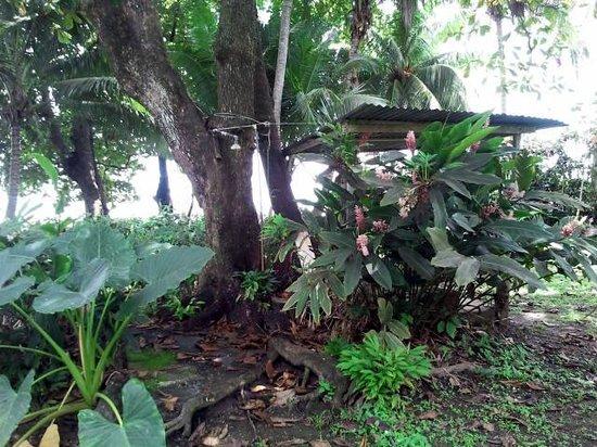 Pargo Feliz Hotel: doccia sotto l'albero