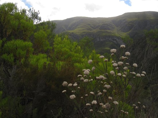 Pat Busch Mountain Reserve: climbing the mountain