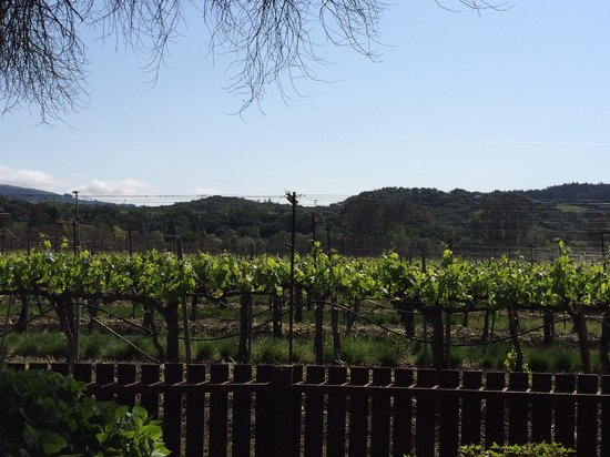 Sonoma Valley Wine Trolley: Naked Winery