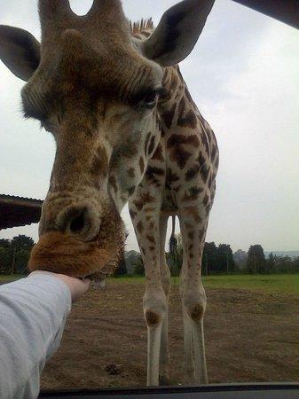 West Midland Safari and Leisure Park: So amazing!