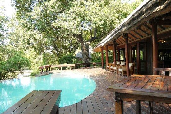 Imbali Safari Lodge: infinity pool common lodge area