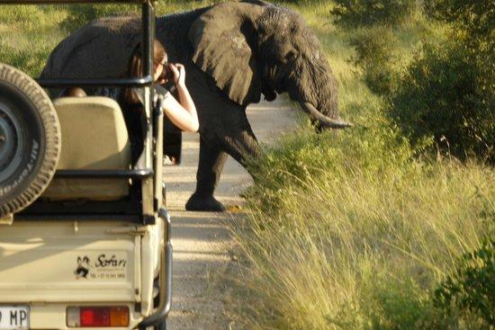 Imbali Safari Lodge : elephants cross so nearby