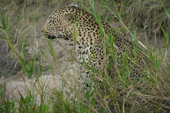 Imbali Safari Lodge: Early morning game drive - 5 kms near our lodge