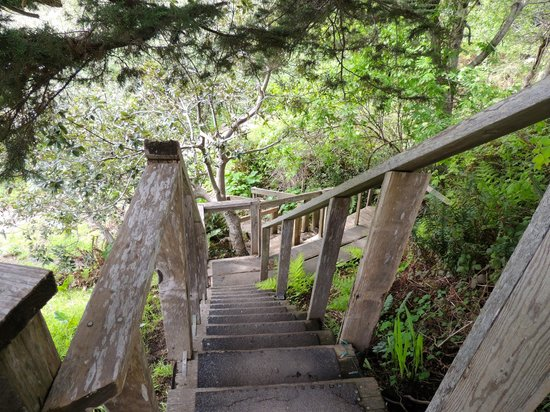 The Elk Cove Inn & Spa: Stairs to trail
