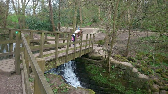 Meanwood Valley Trail: Pooh sticks!