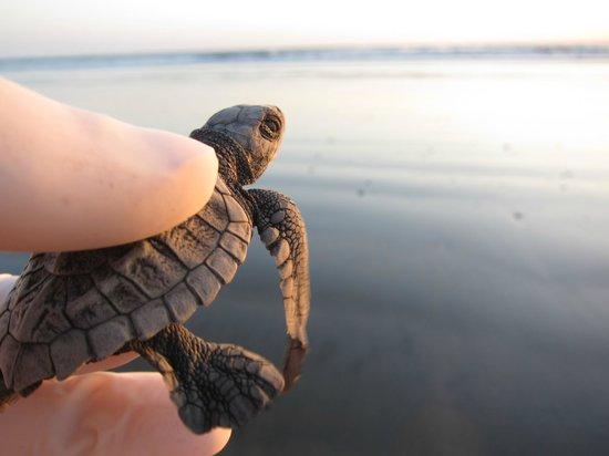 Mundo Milo Eco Lodge: baby turtle release