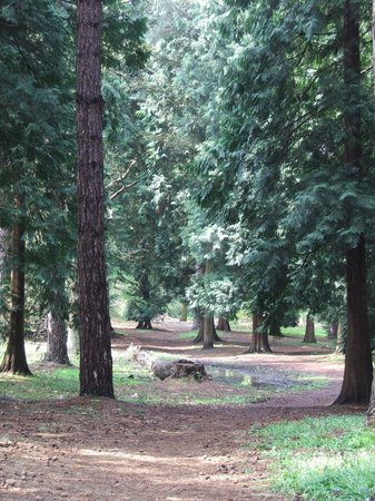 Woodland walk at Virginia Water