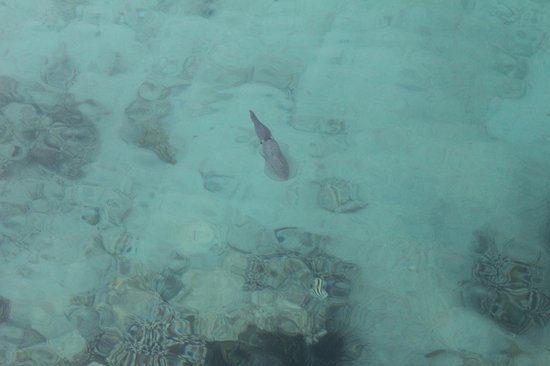Coral Beach Resort : calmar