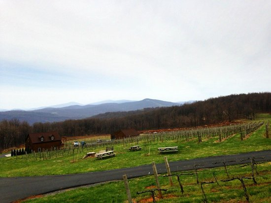 Fox Meadow Winery: A View of the meadow from the back deck