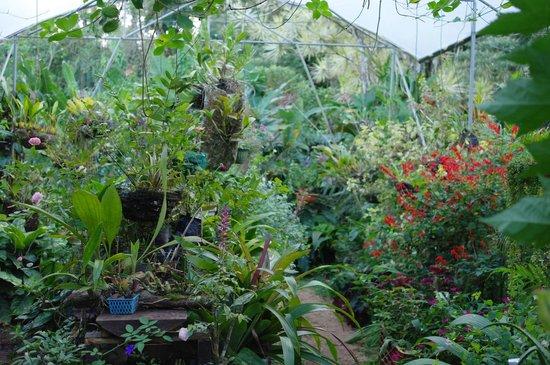 Finca Verde Lodge: Nursery