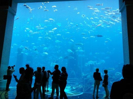 The Lost Chambers Aquarium: Lost Chambers