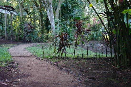 Finca Verde Lodge: Trails