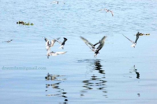 Birds seen in Marine drive