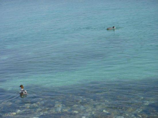 Bains des Paquis : Bain de Paque with clear water