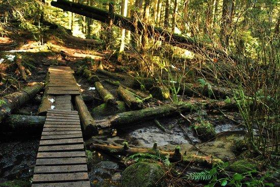 Lynn Canyon Park: Trails in Lynn Canyon