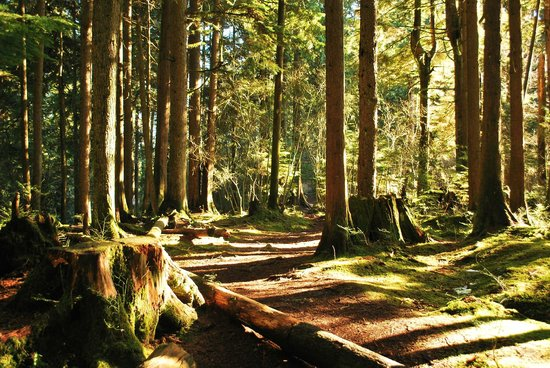 Lynn Canyon Park in March