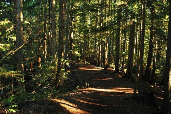 Lynn Canyon Park: Lynn Canyon Trails