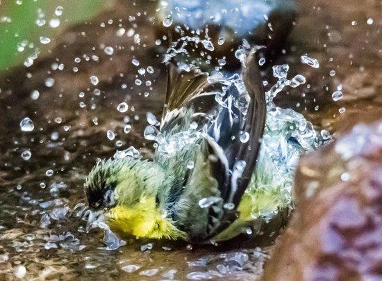 The Canyon Wren - Cabins for Two: Birdbath