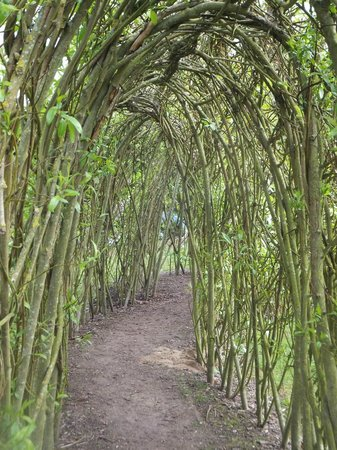 Felbrigg Hall: Real willow tunnel