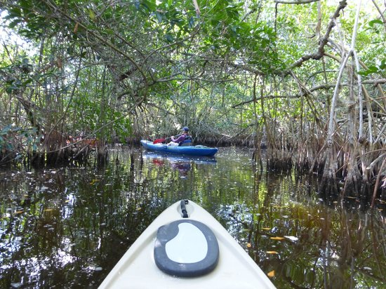 Shurr Adventure Company Day Tours: entering the mangrove tunnels