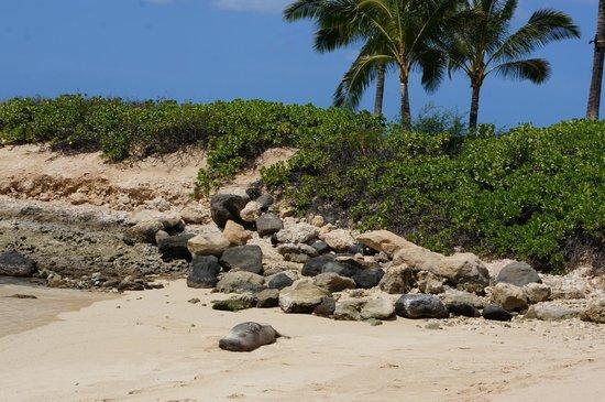 Marriott Ko Olina Beach Club: Ocean cove and safe harbor for wild life