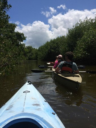 Everglades Area Tours: Mangrove Tunnel Tour