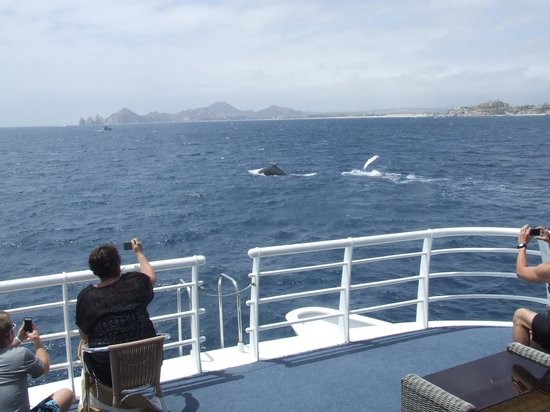 CaboRey Luxury Dinner Cruise: Whales