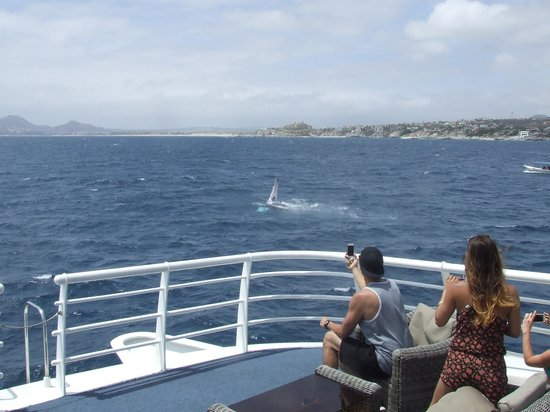CaboRey Luxury Dinner Cruise: Whale again