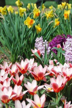 Missouri Botanical Garden: spring flowers