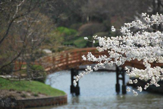 Missouri Botanical Garden: new bridge