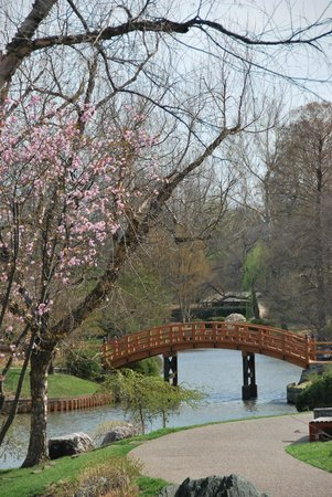 Missouri Botanical Garden: cherry tree
