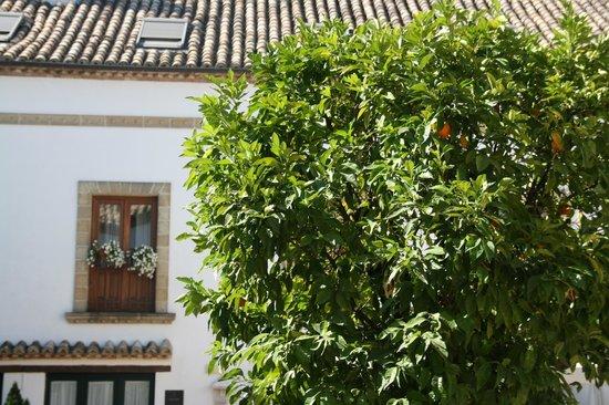 Hotel Puerta de la Luna: Desde la piscina...
