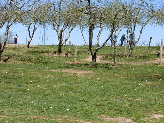 Milburn Orchards: Milburns Easter Egg Hunt Field