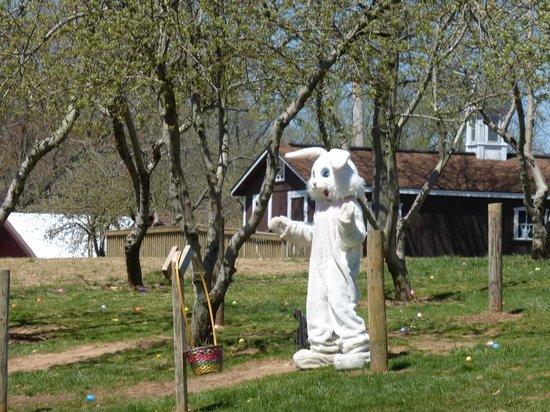 Milburn Orchards: Milburns Easter Bunny